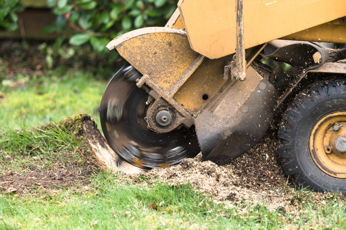 Stump Grinding in Galvin, WA