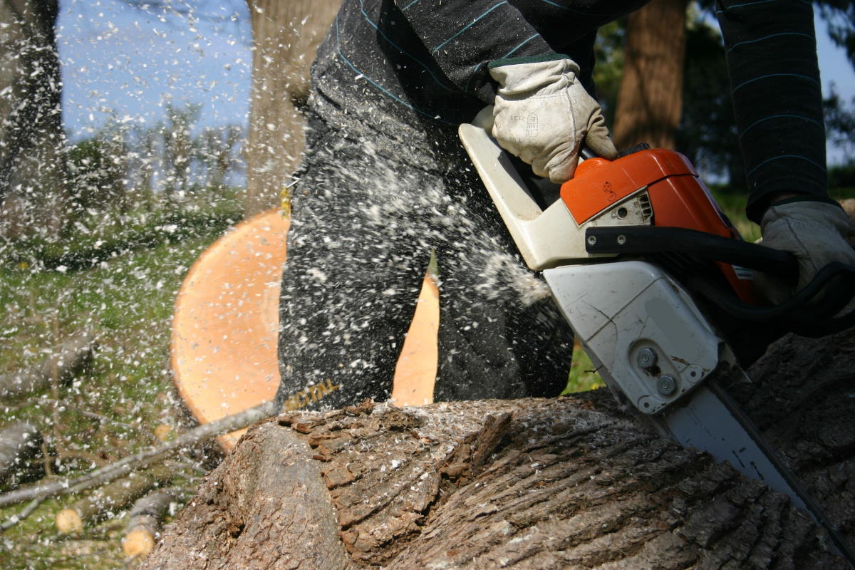 Tree Service in Washington